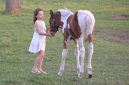 Foal with little girl