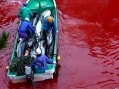 photo: Save Japan Dolphins